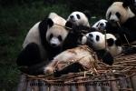 Chengdu (4).JPG