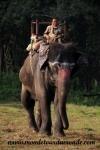 Chitwan (13).JPG
