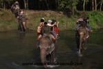 Chitwan (19).JPG