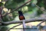 Chitwan (26).JPG