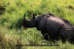 Chitwan (34).JPG