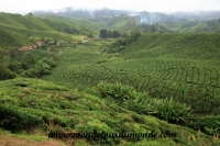Cameron Highlands (29).JPG