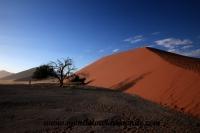 Désert de Namib (101).JPG