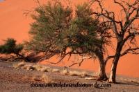 Désert de Namib (111).JPG