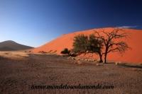 Désert de Namib (112).JPG
