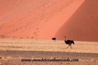 Désert de Namib (149).JPG