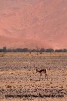Désert de Namib (156).JPG