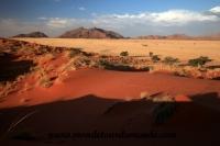 Désert de Namib (172).JPG