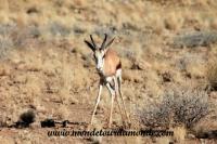 Désert de Namib (50).JPG