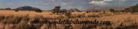Désert de Namib (59).jpg