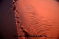 Désert de Namib (69).JPG