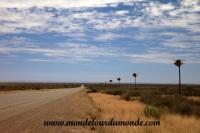 Désert de Namib (3).JPG