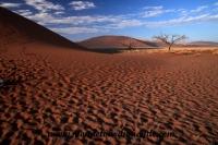 Désert de Namib (102).JPG