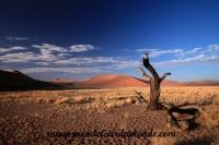 Désert de Namib (106).JPG
