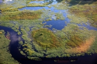Okavango (31).JPG