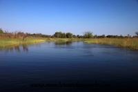 Okavango (65).JPG