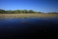 Okavango (66).JPG
