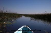 Okavango (75).JPG