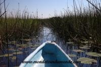 Okavango (76).JPG