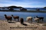 Lac Titicaca (10).JPG