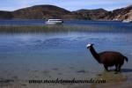 Lac Titicaca (12).JPG