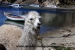 Lac Titicaca (13).JPG